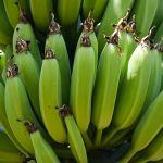 Come usare la farina di banane verdi per dimagrire